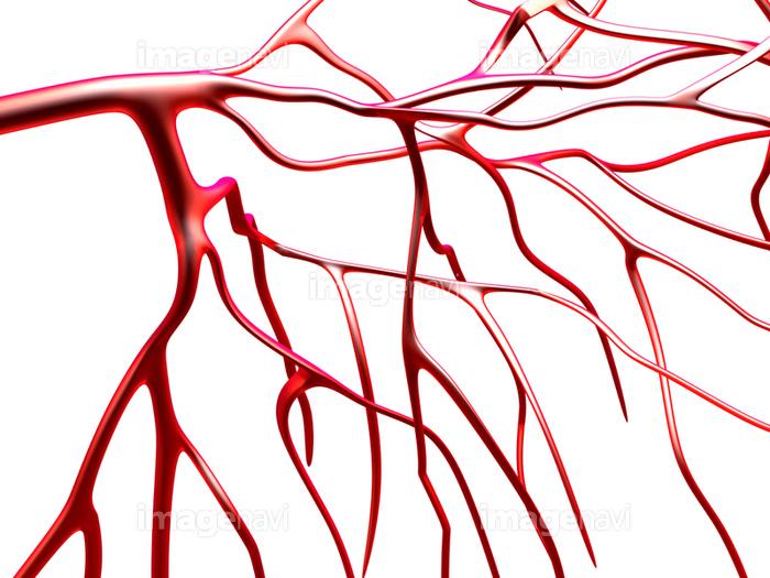 ⑨血管2 | ワイズグローバルビジ...